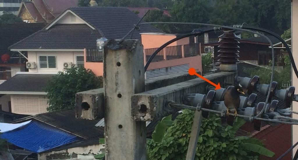 bird_arrow
